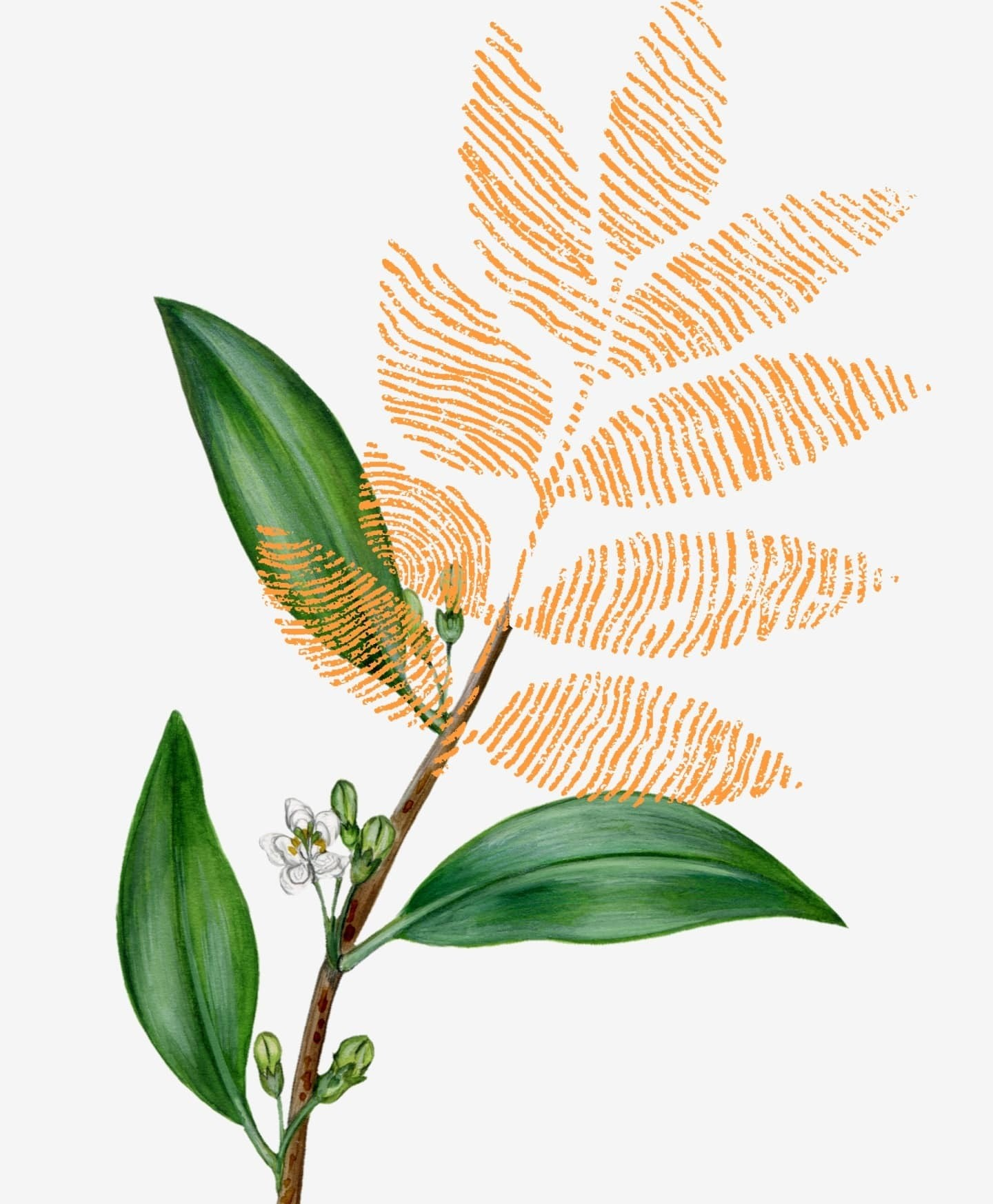 Greenhouse botanical