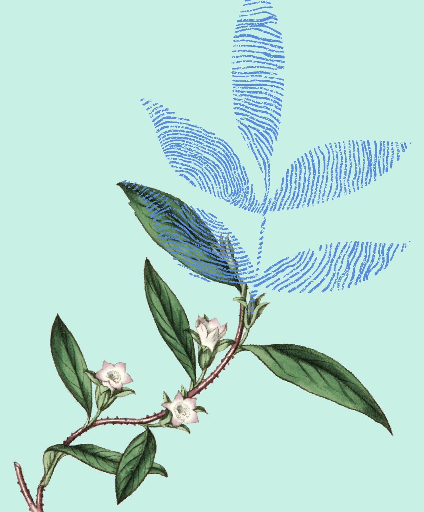 188bet安卓APP温室植物